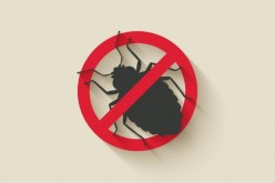 Google relaxes Project Zero bug disclosure policy after Microsoft complaints