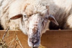 Mobile malware: just a common annoyance or a wolf in sheep's clothing?